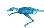 Hutchinson Microraptor L Lateral CT