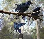 Microraptor Forest Feb 27 FLATwtmk