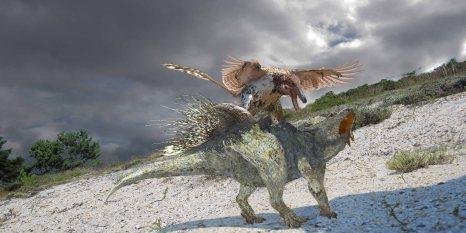 Fighting Dinosaurs Velociraptor Protoceratops
