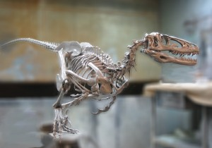 cropped-deinonychus-skeleton-sculpt.jpg
