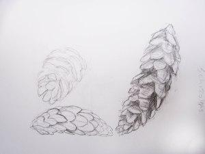 Schizolepis