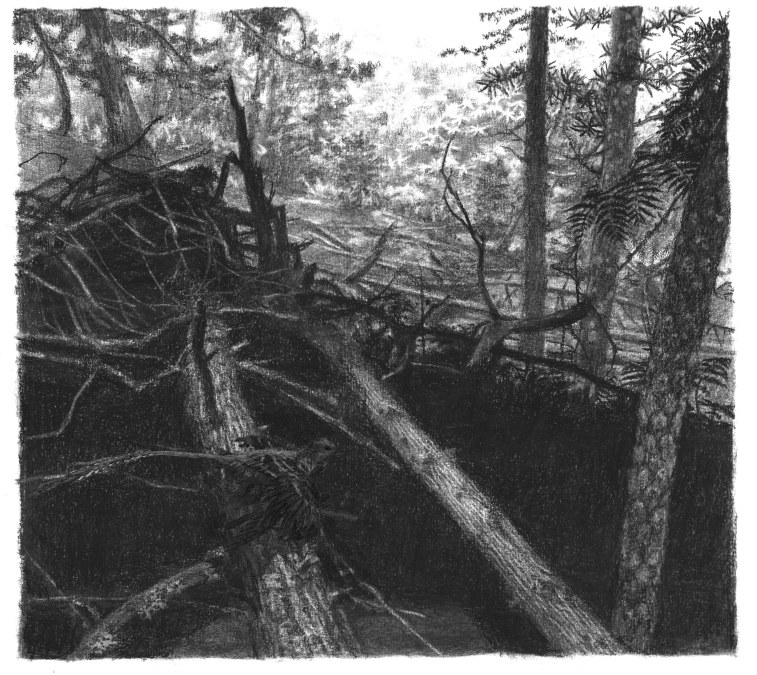 downslope charcoal forest Yixian